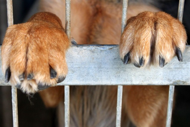 Un perro aguarda una adopción contrarreloj en la Protectora del Tibidabo | Foto: KATI SAUTER