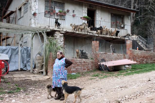 Una iniciativa ciudadana de acogida de animales abandonados en Barcelona | Foto: KATI SAUTER
