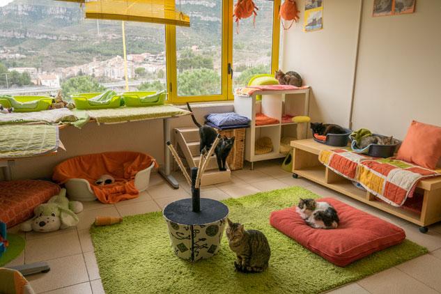 Un refugio para gatos abandonados | Foto: FERNEY ALONSO