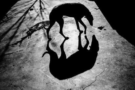 David Arribas, ganador del Premi Gollut de Fotoperiodismo DateCuenta 2018