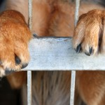 El cruel comercio con el producto animal